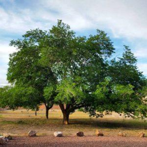 uuclvtree